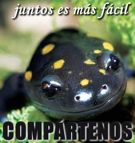 Salamandra mexicana reproduccion asexual