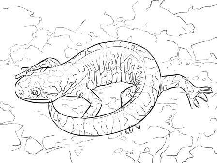 dibujo de salamandra tigre